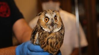 Şanlıurfa'da tedavileri tamamlanan 25 yabani kuş doğaya bırakıldı