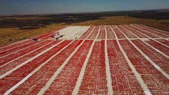 ''GAP'ın merkezi'' domatesi kurutup ekonomiye kazandırıyor