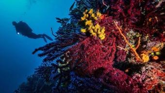 Kırmızı Mercanların derinlerdeki evi: Ayvalık