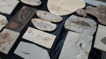 Adnan Oktar'ın evlerinden 150 milyon yıllık, 10 milyon dolar değerinde fosiller çıktı