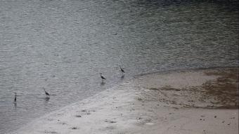 Altınkaya Barajı Gölü'nde korkutan görüntü