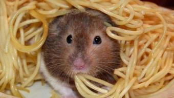 Yemek yiyen hayvanların komik halleri