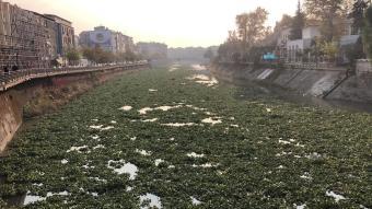 Asi Nehri'nin üzeri su sümbülleri ile kaplandı