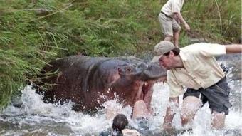 Kızgın hayvanlarla karşı karşıya gelen insanların zor anları
