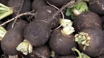 Binbir derde deva mucize besin siyah turpun faydaları