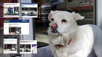 Hastane kapısında 5 gün sahibini bekleyen vefalı köpek Boncuk, dünya basınında