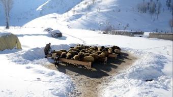 Bitlis'te besiciler kış şartlarındaki zorlu mücadelesi