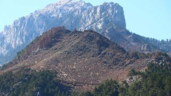 Adana'da yanan ormanlık alanlar tekrar ağaçlandırılmak üzere hazırlanıyor