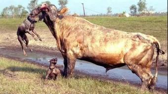 Hayvanlar aleminin en acımasız anları
