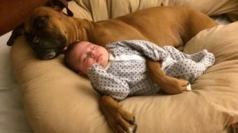 Hayvanlar ile insanların etkileyici dostluğu