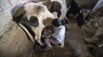 Çiftçiliğe 5 inekle başladı! Devlet desteğiyle sayesinde sürü sahibi oldu