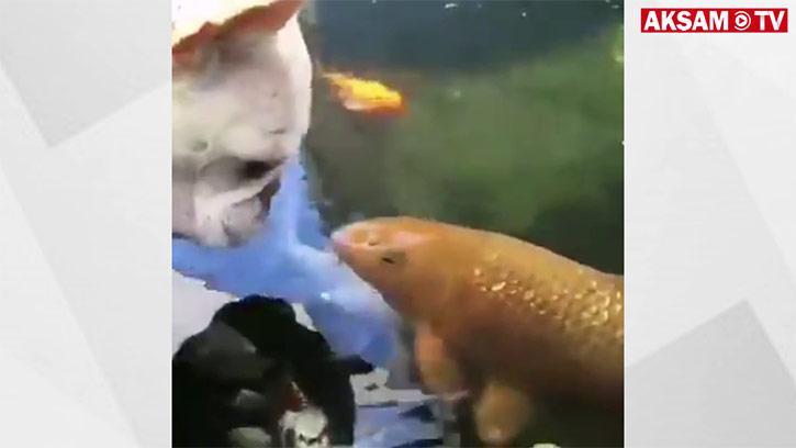 Balık Dostlarını Öpen Köpekçik