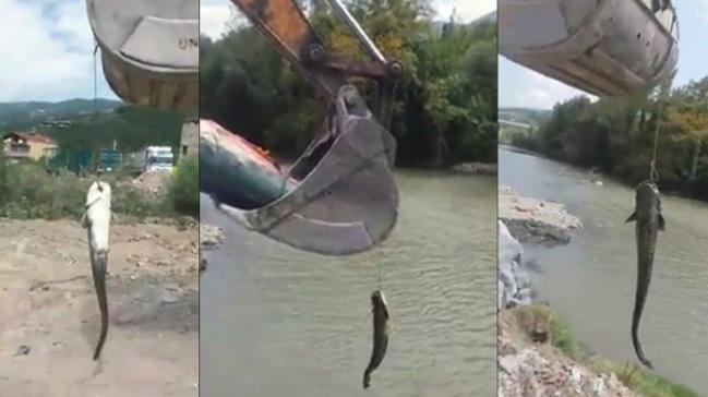 Tuttuğu Balığı Kepçe İle Sudan Çıkarttı