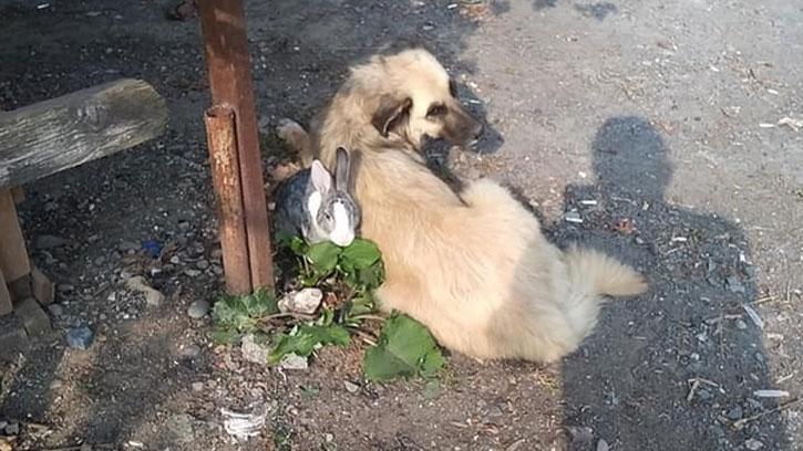 Tavşan ile Köpeğin Dostluğu Şaşırtıyor