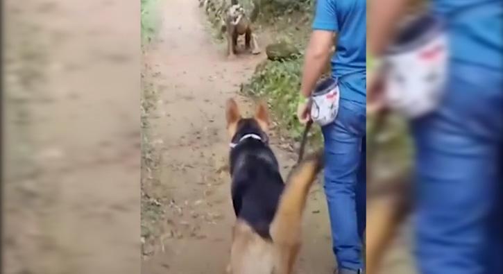 Maket dinazoru gören köpeğin tepkisi
