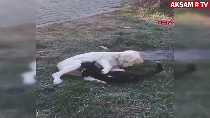 Köpek Kediyi Böyle Emzirdi