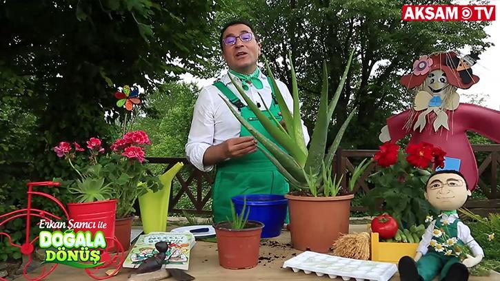 Aloe Vera Bitkisinin Faydaları Nelerdir? | #DoğalaDönüş