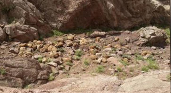Van'da 300 koyun intihar etti