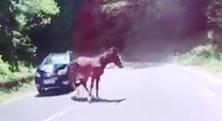 Aracıyla atların arasına daldı