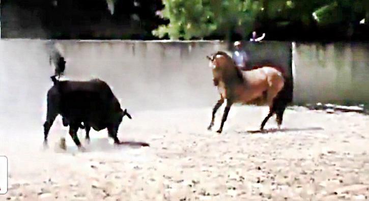 Kızgın boğa ve atın kapışması