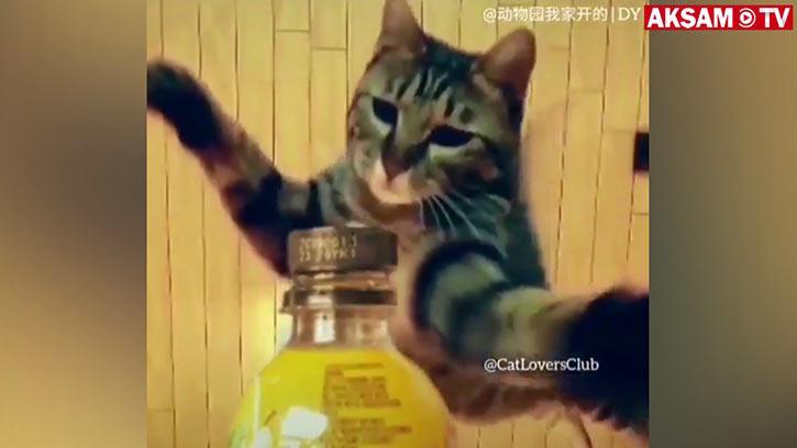 #BottleCapChallenge Akımının En İyisi Bu Kedi