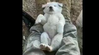 Mehmetçik, yavru köpeği ayağında sallayarak uyuttu... Görüntüler izleyenlerin gönüllerini fethetti