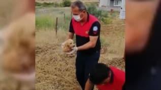 İtfaiye ekipleri yavru köpeğin imdadına yetişti