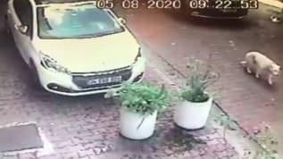 Bunun adı vicdansızlık! Beşiktaş'ta kadın sürücü köpeği ezdikten sonra kaçtı