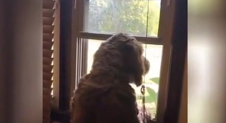 Ambulansa yanıt veren köpek rekor kırdı