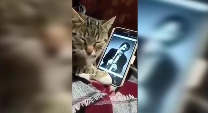 Müslüm Gürses dinleyen efkarlı kedi