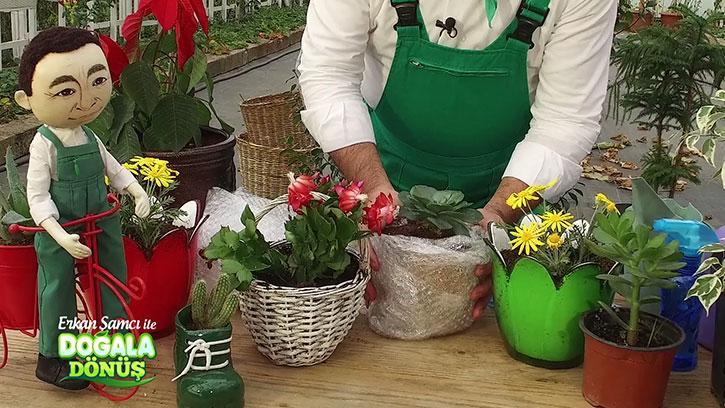 Çiçekleri Soğuktan Nasıl Koruyabiliriz? #DoğalaDönüş