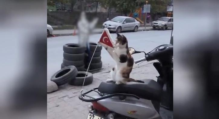 Kedinin bayrak sevgisi rekor kırdı