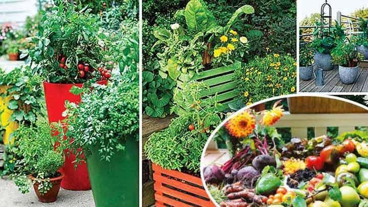 Bahçe ve teraslar sebze üretim yerlerine dönüşüyor