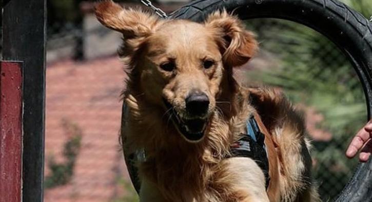 Köpek eğitimi ve Sahiplenme ; Murat Güngör Söyleşi
