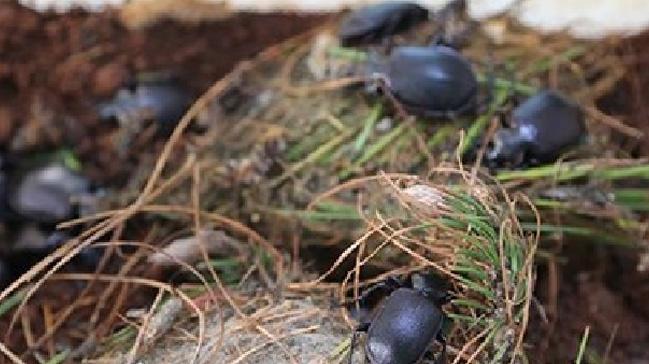 Bilim insanları açıkladı: Böcek türlerinin yüzde 40'ı yok olabilir