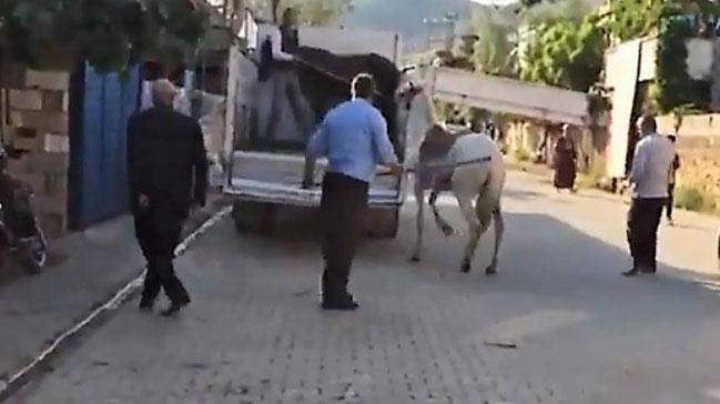 Atına sopayla vuran şahsa ceza