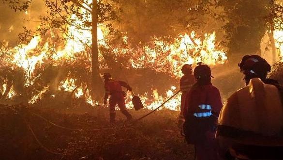 İspanya'da korkunç yangın: 220 hektar orman kül oldu