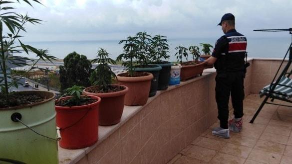 Deniz manzaralı balkonunda saksılar içinde esrar yetiştirmiş