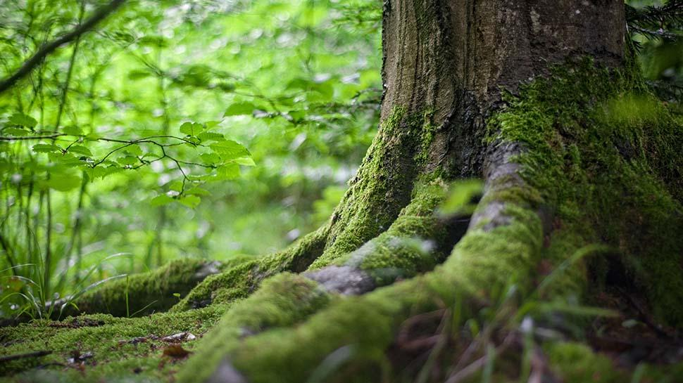Dünyanın akciğeri denilen ormanların insanlar için önemi