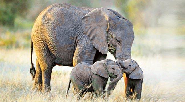 Hayvanlar da insan gibi yas tutuyor