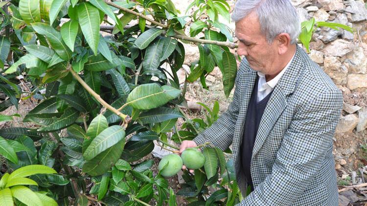 Denemek için 12 ağaç dikti! Bir yılda 45 bin lira kazandı