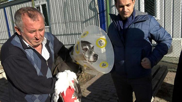 Bakırköy'de hayvan barınağında pitbull dehşeti! Paramparça etti