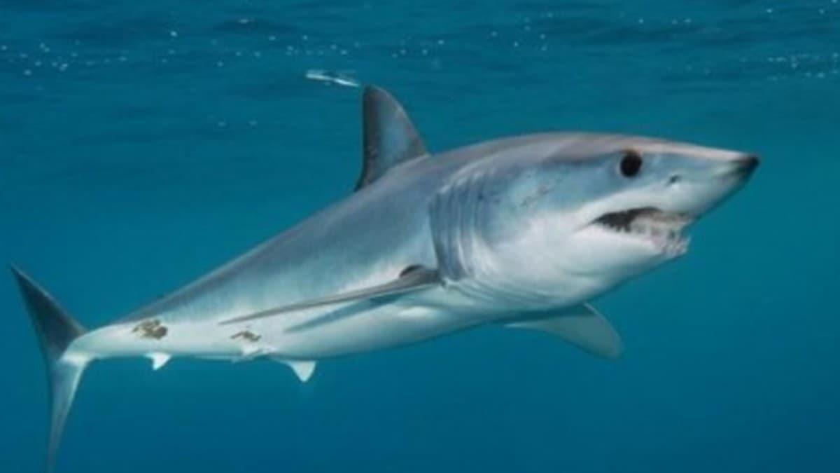 Oltasına takılan yavru köpek balığı elini ısırdı