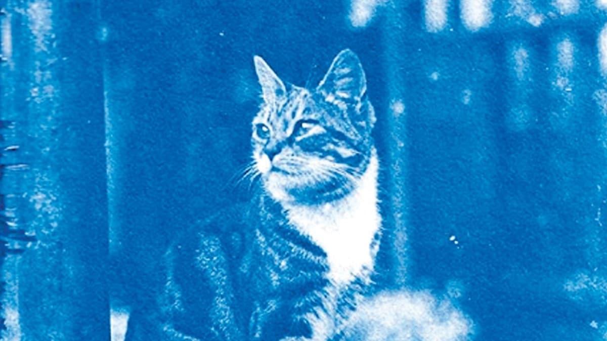 120 yıllık 'zaman kapsülü'nden kediler çıktı