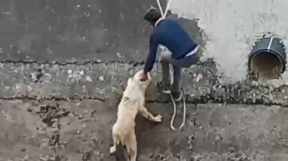 Su kanalına düşen köpeği itfaiye erleri gibi kurtardılar