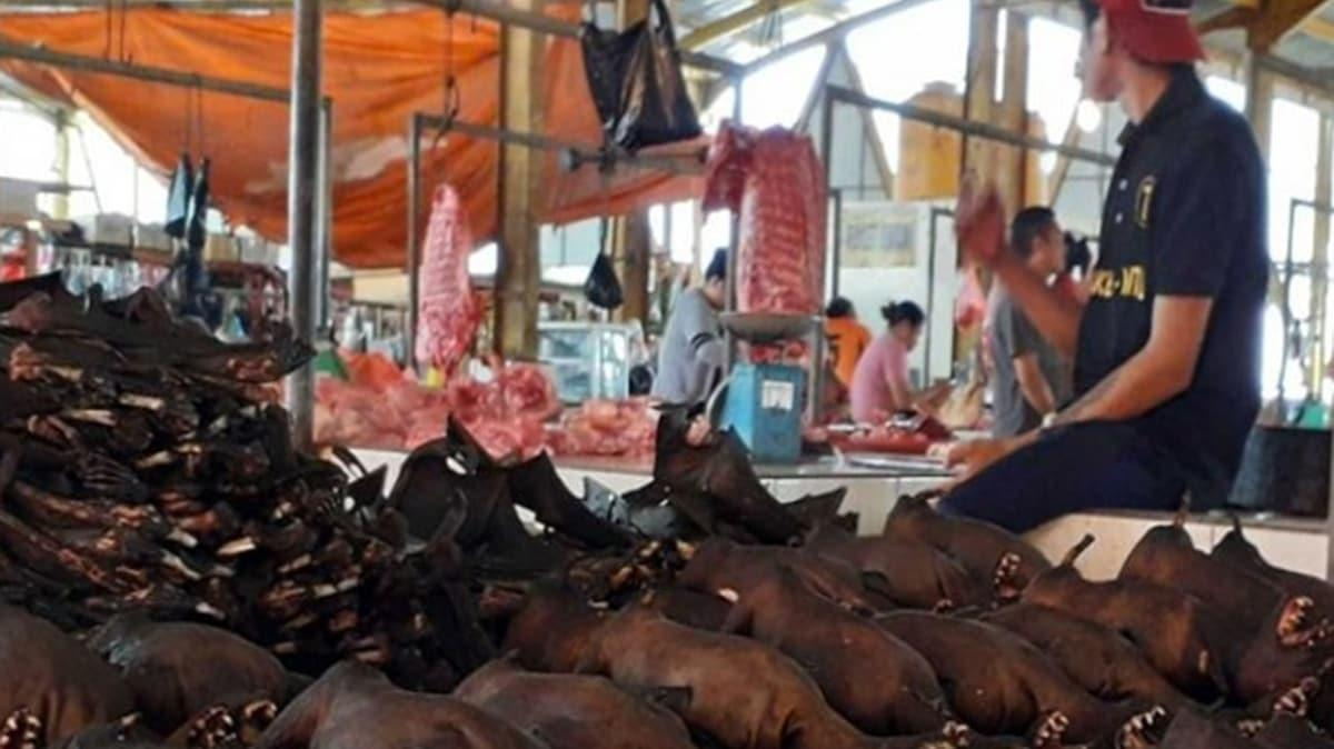 Çin'de koronavirüsün ilk görüldüğü vahşi hayvan pazarları yeniden açıldı