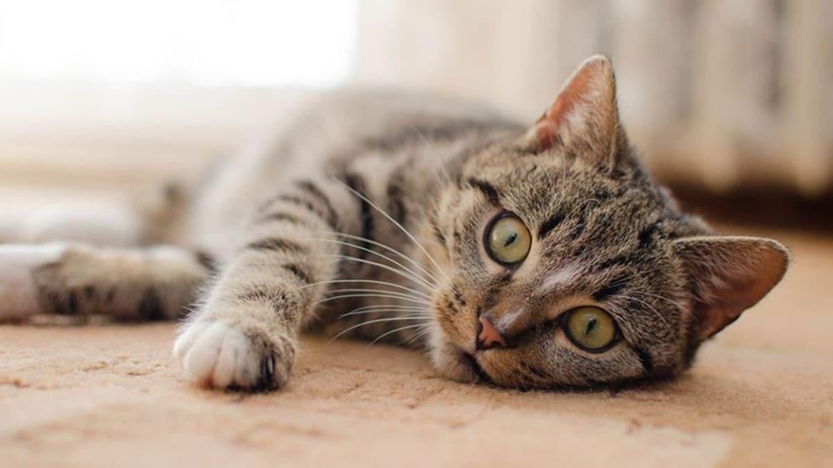ABD'de ilk defa evcil hayvanlarda koronavirüs tespit edildi
