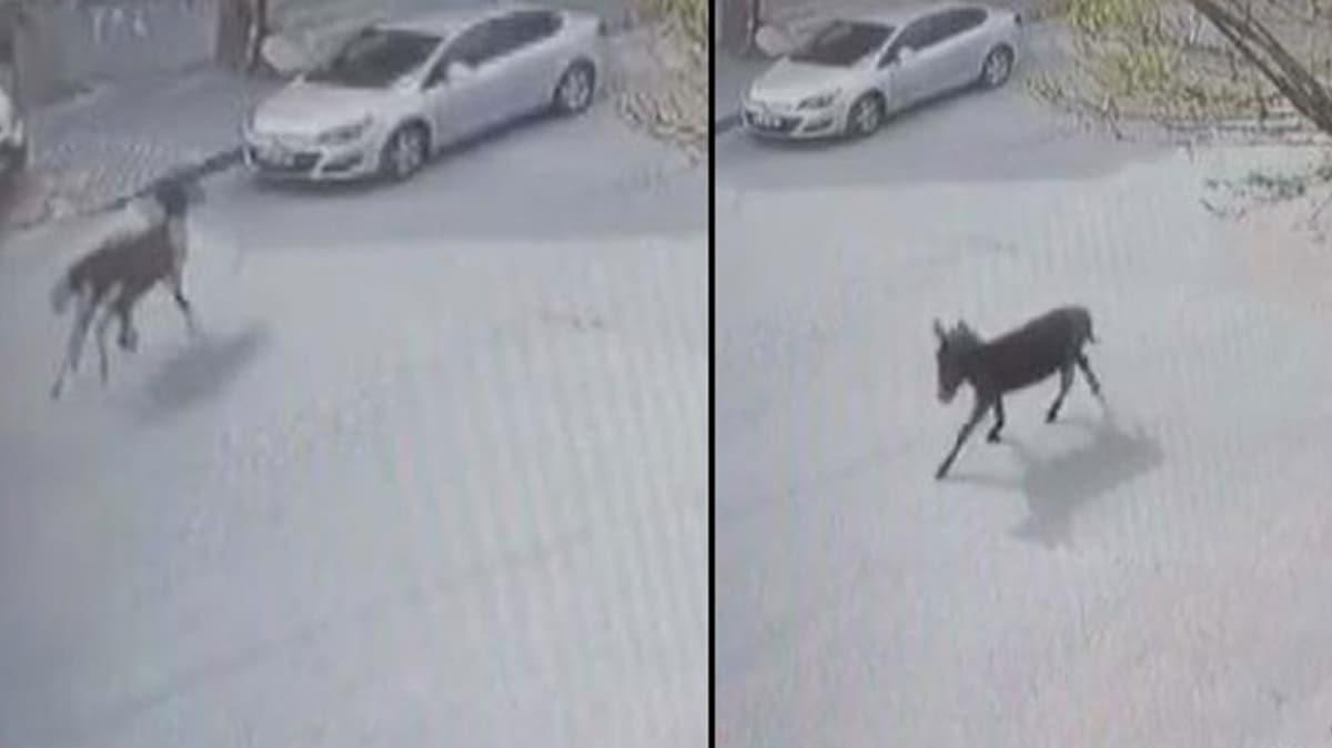 Güvenlik kamerasını izleyince şok yaşadı: At, resmen aracımızı pert etmiş