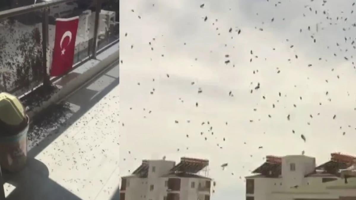 Bu kez çekirgeler değil arılar istila etti! Antalya'da tedirgin eden olay