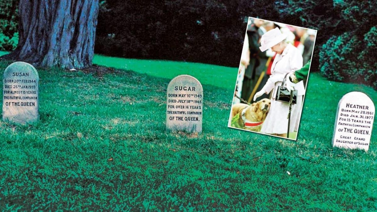 Kraliçe'nin köpek mezarlığı